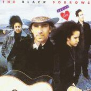 Image for 'The Black Sorrows'