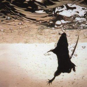 Imagen de 'Swimmer'
