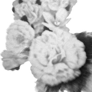 Image for 'Wildhoney EP'