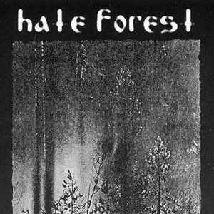 Image for 'Temple Forest'
