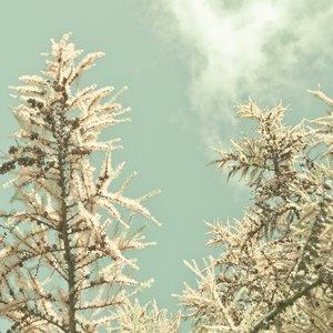 Image for '暖かな季節 (Warm Season)'