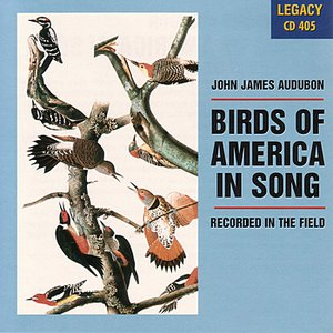 Image for 'Birds Of America In Song'