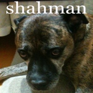 Image for 'Shahman'
