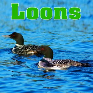 Image for 'Soothing Loon Calls Across a Northern Lake'