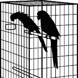 Image for 'InTheCage'