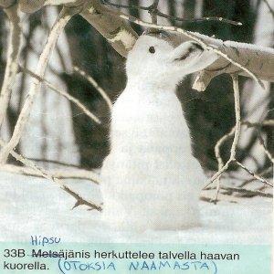 Bild för 'Otoksia Naamasta'