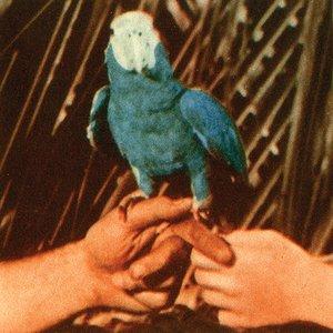 Image for 'Pulaski'