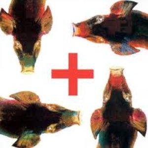 Imagem de 'Testa plastica'