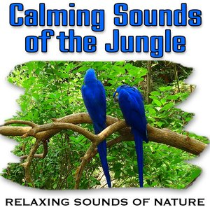 Image for 'Calming Sounds of the Jungle (Nature Sounds)'
