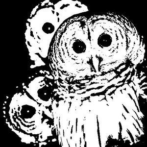 Bild für 'The Owls Are Not What They Seem'
