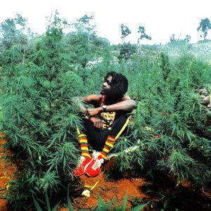 Image pour 'Peter Tosh'
