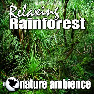 Image pour 'Forest Rain a Natural Habitat for Yoga Relaxation and Meditation'