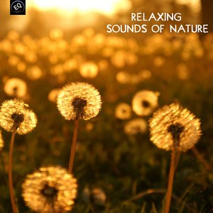 Image for 'Relaxing Sounds of Nature and Relaxing Songs'