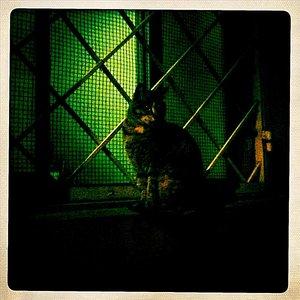 Image for 'Noche en Ortigia - Single'