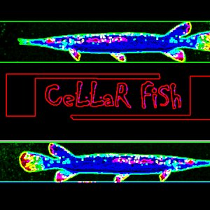 Fish music listen free at for The fish fm