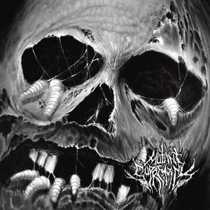 Image for 'Rotting Season'