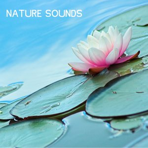Image pour 'Mountain Creek White Noise Nature Sounds for Baby Sleep'