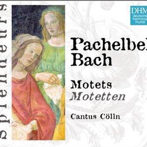 Bild för 'DHM Splendeurs: Pachelbel/Bach: Motets'