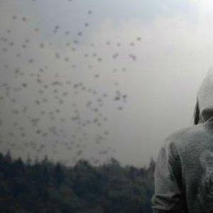 Imagen de 'Like Desolate Like True'