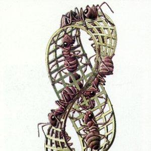 Imagen de 'Untitled Album'