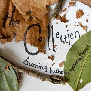 Immagine per 'burning bushes, moving trees'