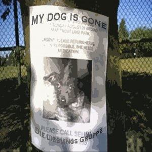 Image for 'My dog is gone'
