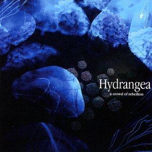 Image for 'Hydrangea'