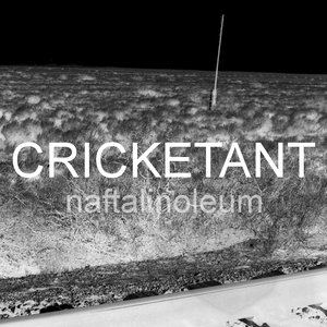 Image for 'cricketant'