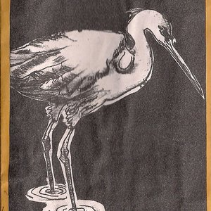 Image for 'so many egrets'