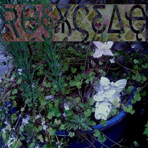 Image for 'rosaceae'