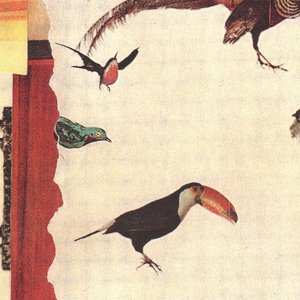 Image for 'Calypso Borealis'