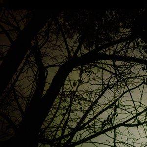 Imagem de 'Hidden And Tied'