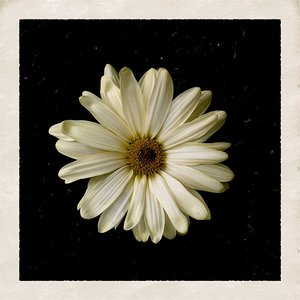 Bild för 'Flower'