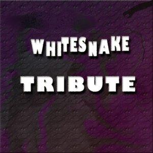 Image for 'Whitesnake Tribute'