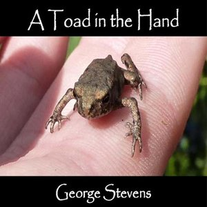 Immagine per 'A Toad in the Hand'