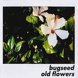Image for 'Old Flowers'