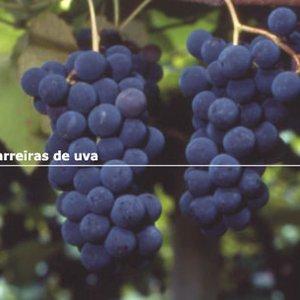 Bild für 'Vinheta'