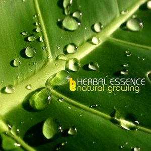 Image for 'Herbal Essence'