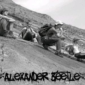 Image for 'Alexander Beetle'