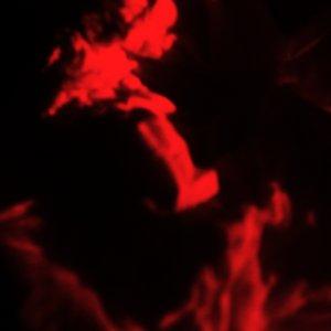 Image for 'Youpi EP#1'