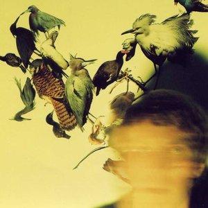 Bild för 'Axolotl'