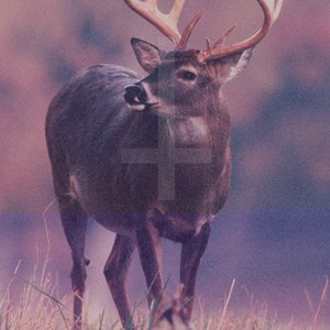 Image for 'Deer Diary'