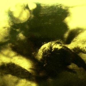Image for 'Bleiburg feat. Werkraum and Von Thronstahl'