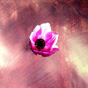 Image for 'anemone'