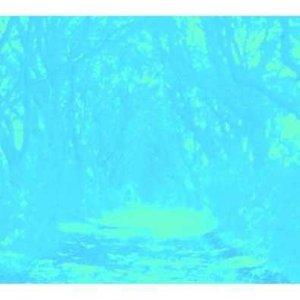 Bild für 'R E A L L O V E (Optimo Espacio Remix)'