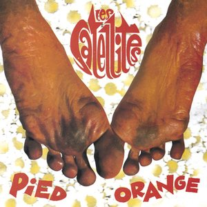 Image for 'Pied orange'