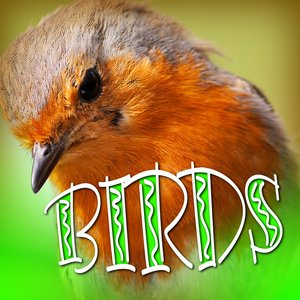 Image for 'European Forest Birds Hollywood Sound Effects'