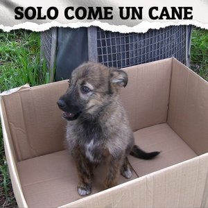 Image for 'Solo come un cane (feat. Rueka)'