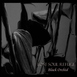 Image for 'Black Orchid'