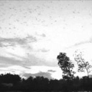 Imagen de 'When The Last Bird Has Fallen'